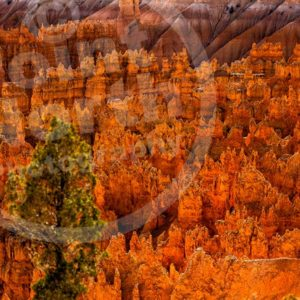 Point North Photography-BRYCE CANYON