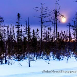Point North Photography-TAMARACK TREES