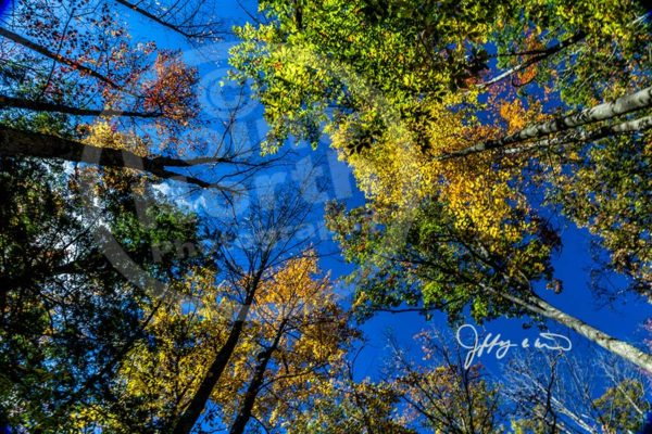 Point North Photography-TREETOPS