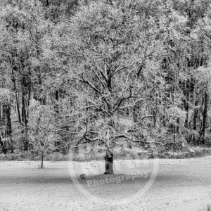 Point North Photography-WINTER TREE